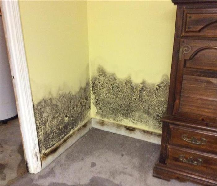 Flooded Basement Leads to Mold Growth