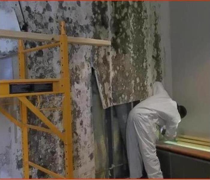 Mold Remediation What is the difference between Mold Removal and Mold Remediation?
