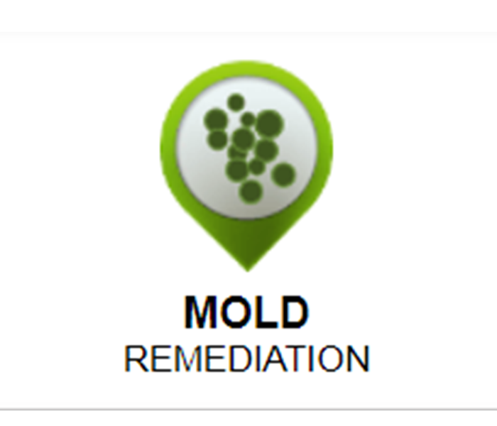 Mold Remediation How to remove mold from carpet